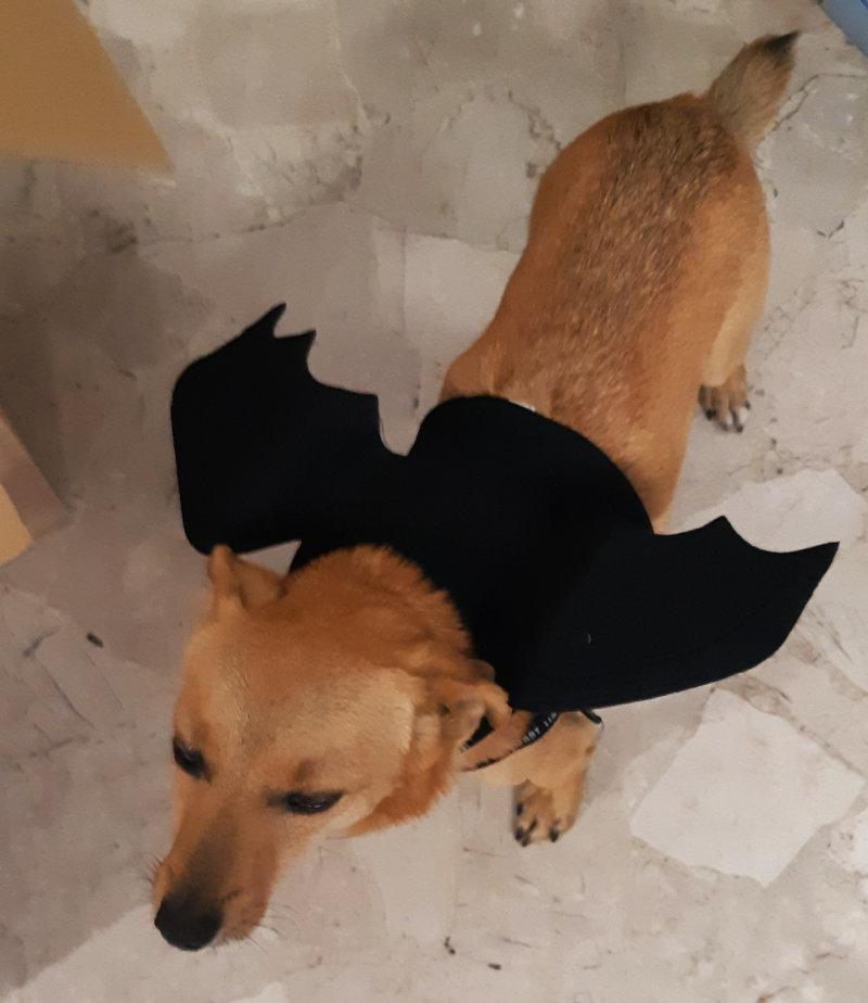 Cane Pipistrello